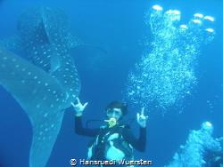 Lucky when the whaleshark pass by Hansruedi Wuersten