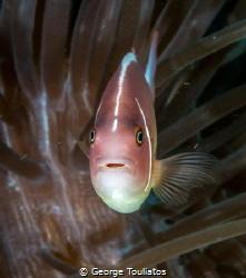 Surprised Nemo!!! by George Touliatos