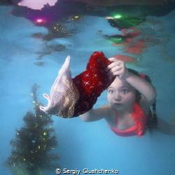 «Christmas photography-2019.». by Sergiy Glushchenko