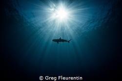 Black tip in the sun by Greg Fleurentin