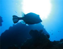 Trunkfish in the sun. Canon SD550. by Paul Holota