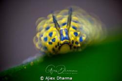 DOF by Ajiex Dharma