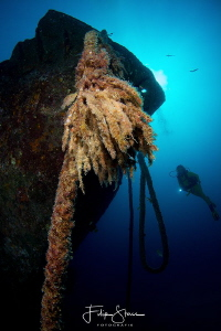 Diver at the Fang Ming wreck, La Paz, Mexico by Filip Staes