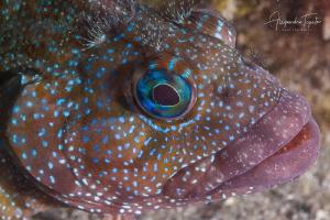 Strange fish, La Paz México by Alejandro Topete