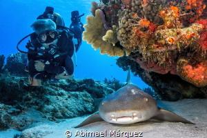 Evelio and the nurse shark, Cozumel. by Abimael Márquez