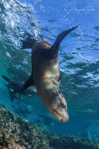 Sea Lion with me, Magdalena Island México by Alejandro Topete