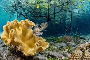 Mangrove,Raja Ampat,West-Papua, Indonesia by Filip Staes