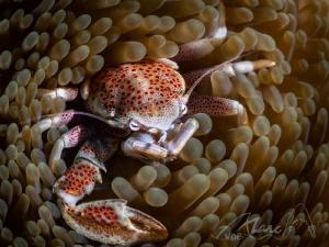 crabcircles by Marc Van Den Broeck