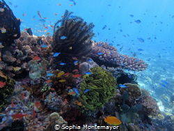 it was a beautiful day and an even more beautiful dive! I... by Sophia Montemayor