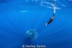 Open Ocean Hunt by Henley Spiers