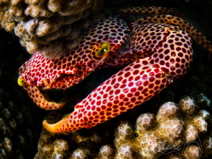 red spots by Marc Van Den Broeck