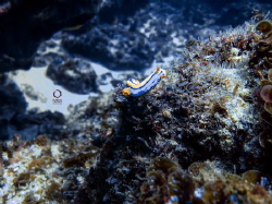 This nudi has been taken with an iPhone 4s and no strobe.... by Marco Calvani