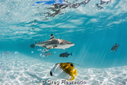 My blue lagoon by Greg Fleurentin