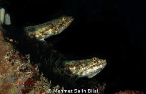 Predators. by Mehmet Salih Bilal