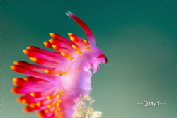 Profile of a nudi. Looks like a rabbit. Taken by sony 650... by Qunyi Zhang