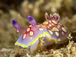 Nudi by Andrew Macleod