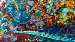 """Kaleidoscopic""  Colorful Algae on the rocks in St. Thoma... by Steve Dolan"