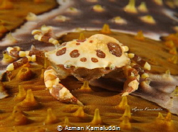 Camouflage by Azman Kamaluddin