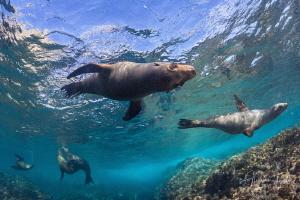 Cute Sea Lion, Isla Magdalena México by Alejandro Topete