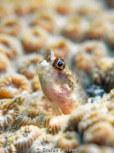 Curiosity