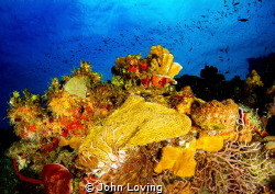 Taken on the north side of Little cayman by John Loving