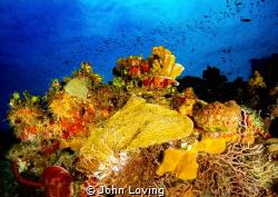 Taken on the north side of Little cayman by John Loving