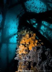 Diving off the coast of city Mancora offers a unique oppo... by Nikolaj Bekarslanov