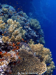 Another Red Sea Wall Scenic. by David Gilchrist