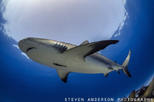 Hole in the sea - Reef Shark at Tiger Beach. Every Shark ... by Steven Anderson