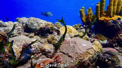 """""""Reef Life""""  A snapshot of Varied life on a reef. Taken i... by Steve Dolan"""