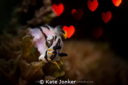 Nudibranch Love Crowned nudibranch with Hollywood style ... by Kate Jonker