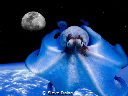 """Alien Octopod"" Octopus is really from St. Thomas, but I'... by Steve Dolan"