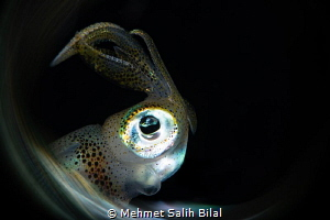 Squid profile. by Mehmet Salih Bilal