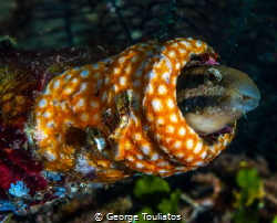 Blenny!!! by George Touliatos