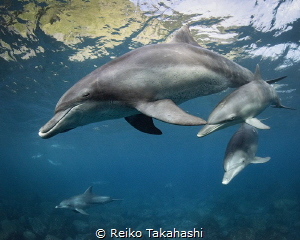 Mikura is surrounded by mountains. The dolphin living bay... by Reiko Takahashi