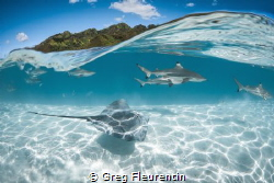 Under a wave in in Moorea by Greg Fleurentin