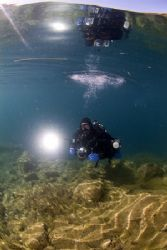Mark in the shallows, Capernwray.