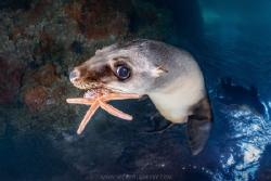 Sea Lion Chew Toys by Nick Polanszky