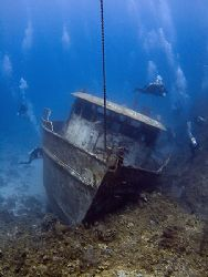Another look at The Mr. Bud. Roatan, Bay Islands. Fuji F8... by Jennifer Temple