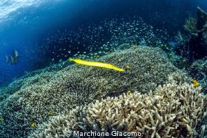 The coral sea . Raja Ampat . Indonesia . nikon D800E , 1... by Marchione Giacomo
