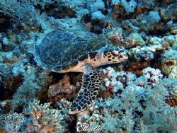 Always around, turtles by Eduard Bello