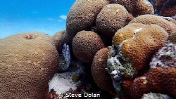 Spotted Moray just off shore in st. Thomas. Taken with Ol... by Steve Dolan