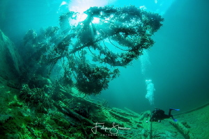 """Under the tree"" Diver in lake Samaranger, Fernpas, Tirol... by Filip Staes"