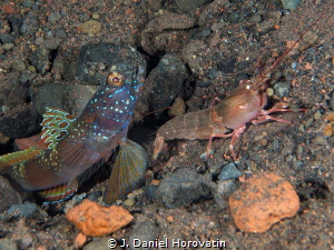 Goby with shrimp by J. Daniel Horovatin