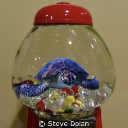 """Aquatic gumball machine"" Green Sea Turtle taken in Turtl... by Steve Dolan"