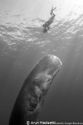 Checking out a whale (taken under permit) by Arun Madisetti