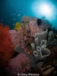 Healthy reef scenery @Pemuteran, Bali. by Joerg Blessing