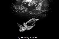 Loggerhead by Henley Spiers