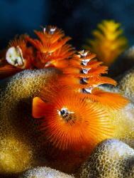 Multi-colored Polychaeta worms. by Sergey Lisitsyn
