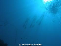 Freedivers by Hansruedi Wuersten